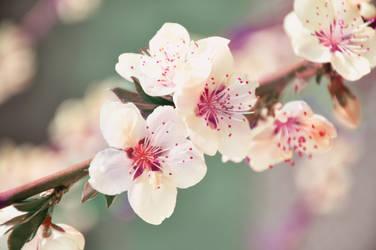 Springtime by Zelma1