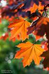 Autumn in springtime
