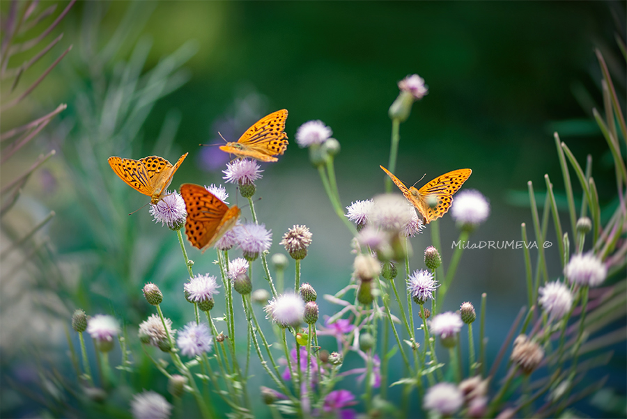 The Butterfly Kingdom by Zelma1