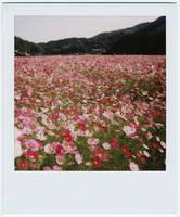 ForgottenParadise by Hantenshi by VintageRepublik