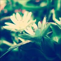 Flowerets by Justynka by VintageRepublik