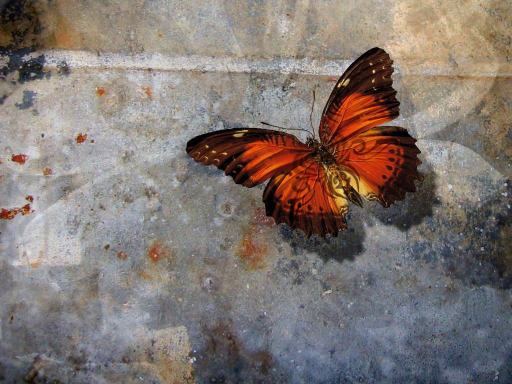 Butterfly Tattoo - butterfly tattoo