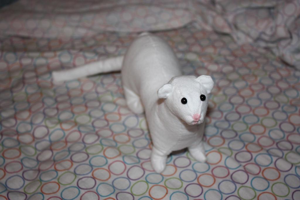 White Ferret by yanagi-yami on DeviantArt