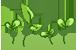 Sprouts + Plz