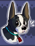 Boston Terrier - Patreon Request