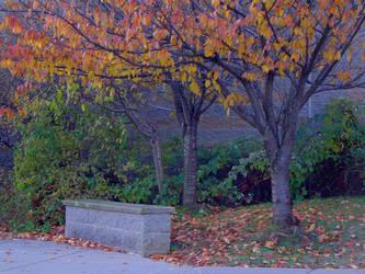 bench by Sera-Lisse