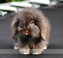 Rabbit by Pebels