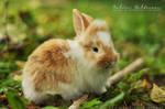 Rabbit baby - 7