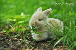 Rabbit Baby 2012 - 3