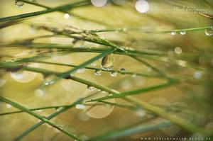 Water drops by Pebels