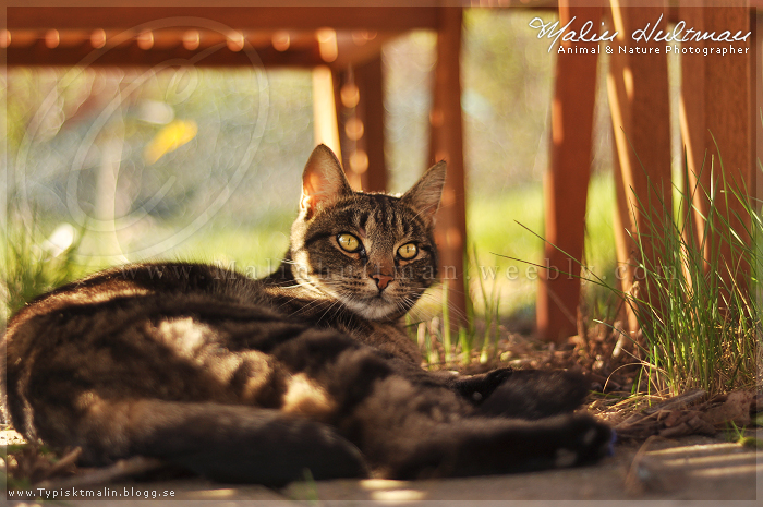 Dreaming cat.. by Pebels