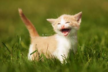 Baby kitten.. by Pebels