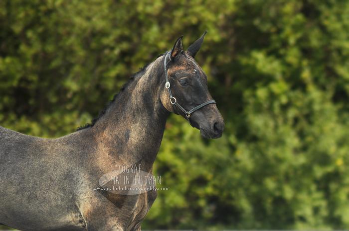 Beautiful foal by Pebels
