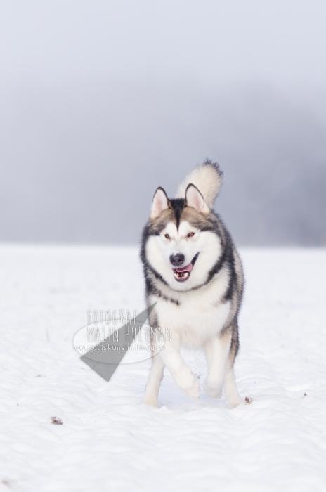 Alaska by Pebels