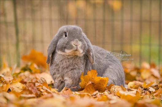 Zapp with leafs