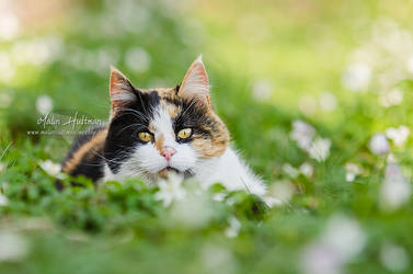 Cat in wood anemone by Pebels