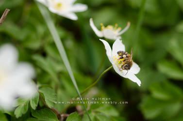 Little flower by Pebels