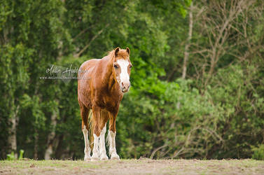 Horse.. by Pebels
