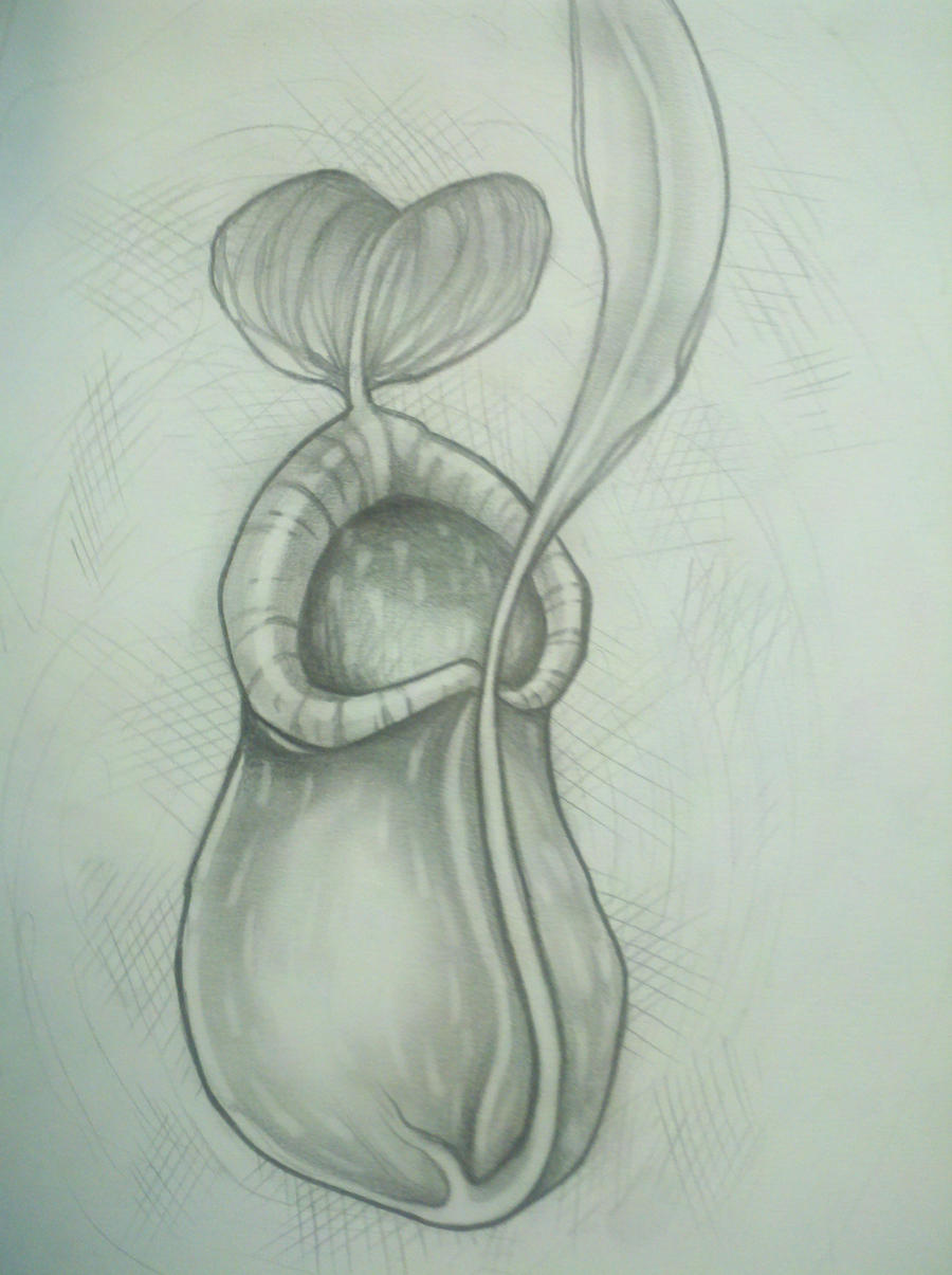 Pitcher plant drawing - photo#3