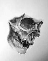 Another skull by SilentStudiosUK