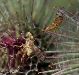 jealous fly by pho2s4me