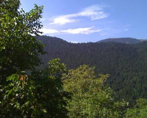 Fir Mountain I