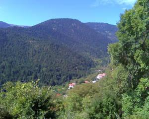 Fir Mountain II