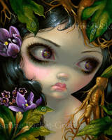 Poisonous Beauties XIV: Mandrake Root by jasminetoad