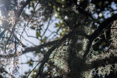 Sun through the moss by horsesrule730