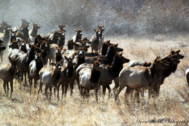 Wild herd by horsesrule730