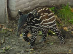 Baby Tapir Nakal by SSJGarfield