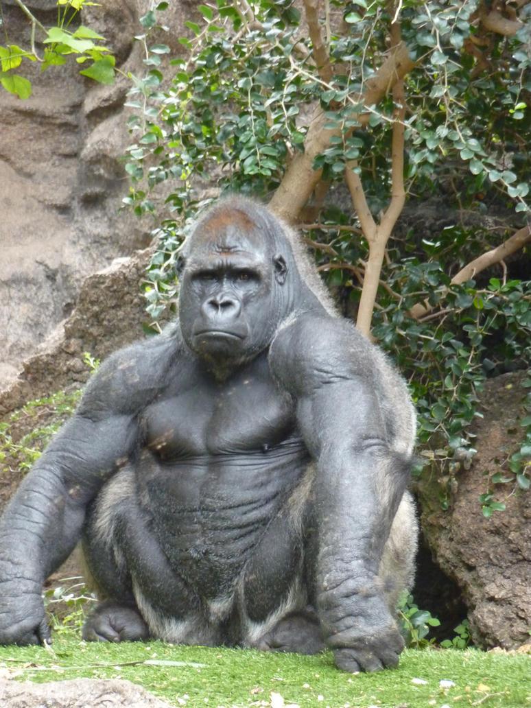 Gorilla penis naked scene