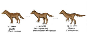 Raptog Evolution
