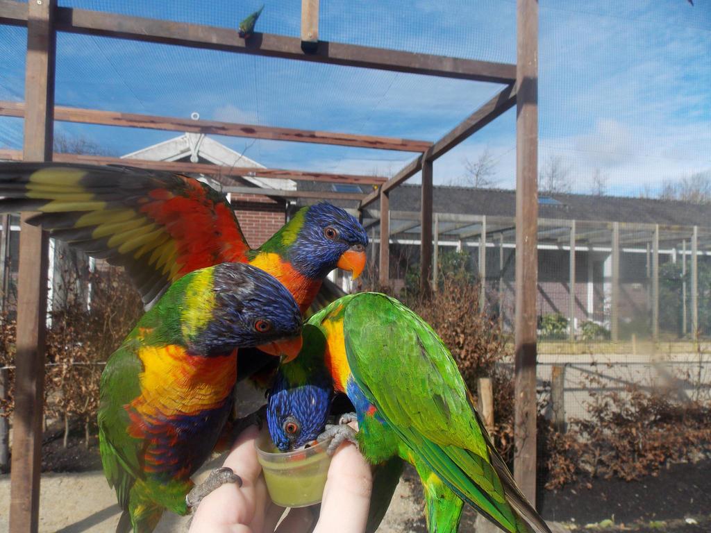 Feeding rainbow lorikeets by SSJGarfield