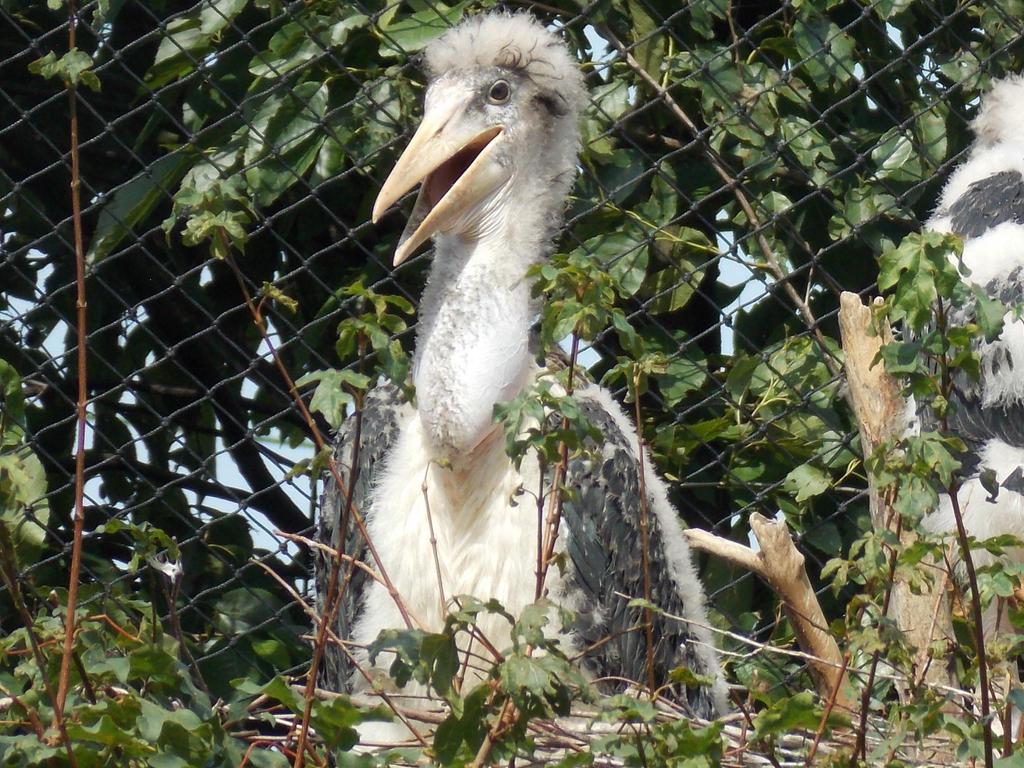 rotterdam zoo baby marabou stork by ssjgarfield on deviantart