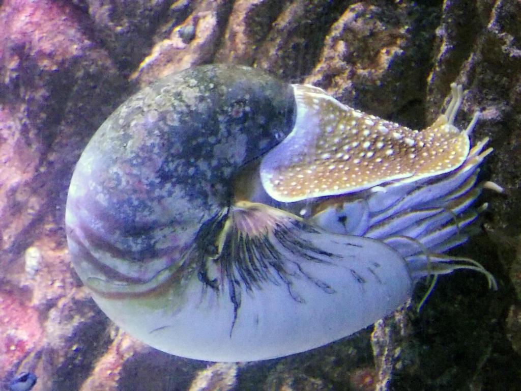Sea Life Benalmadena - Nautilus by SSJGarfield