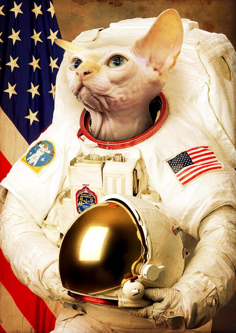 Astronaut Cat by Bakus-design on DeviantArt