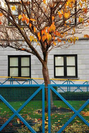 Autumn by gubancc