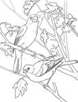 Bunting and Grosbeak coloring page