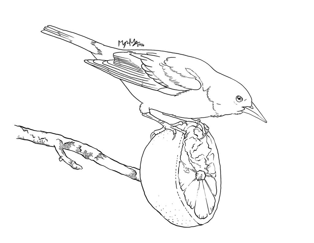 Baltimore Oriole coloring page by snailkites on DeviantArt