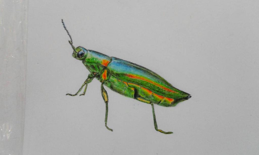 Bug Practice (Finished) by CaleidoscopeHeart
