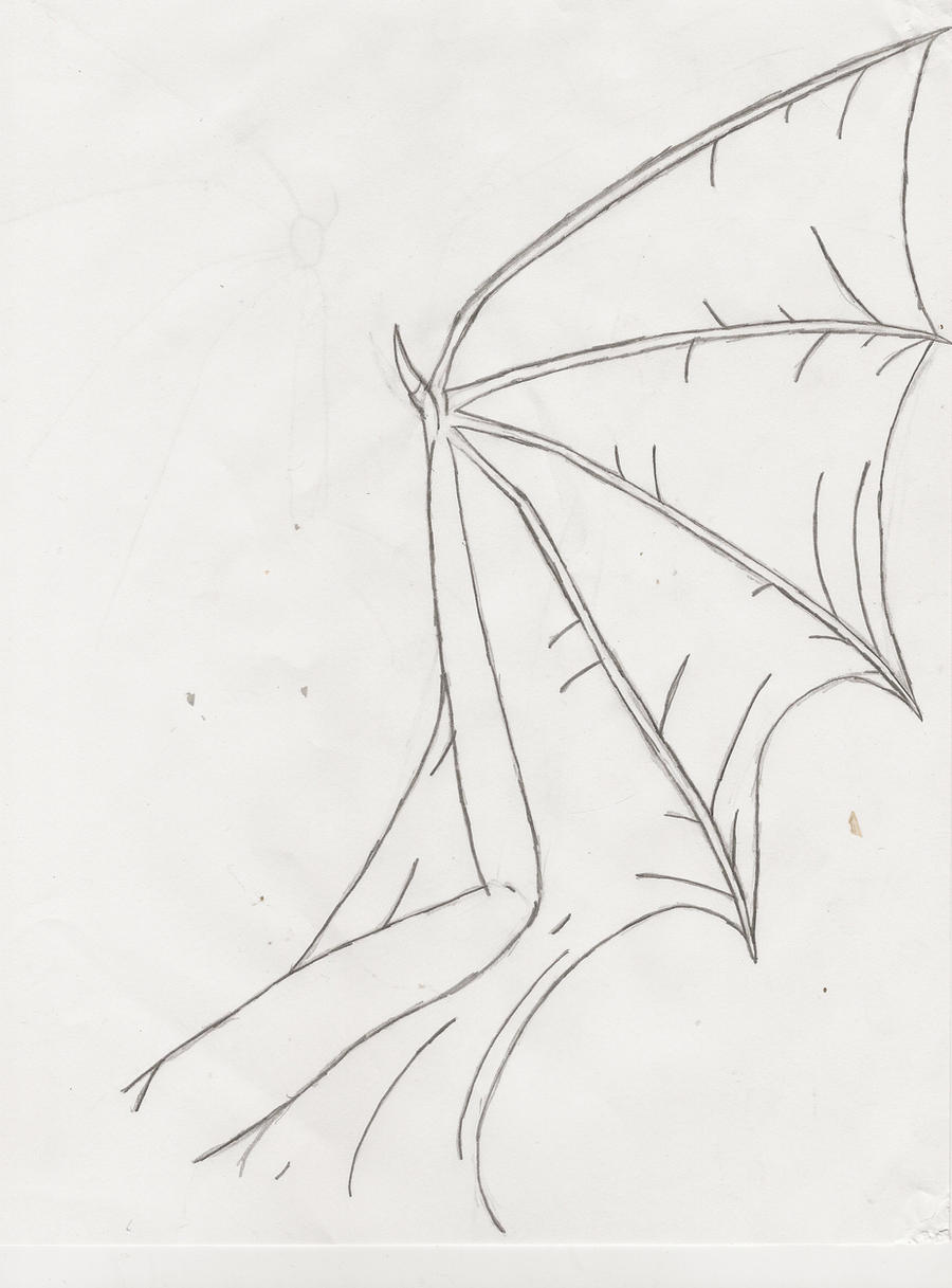 Line Drawing Wings : Dragon wing line art practice by ironatlas on deviantart