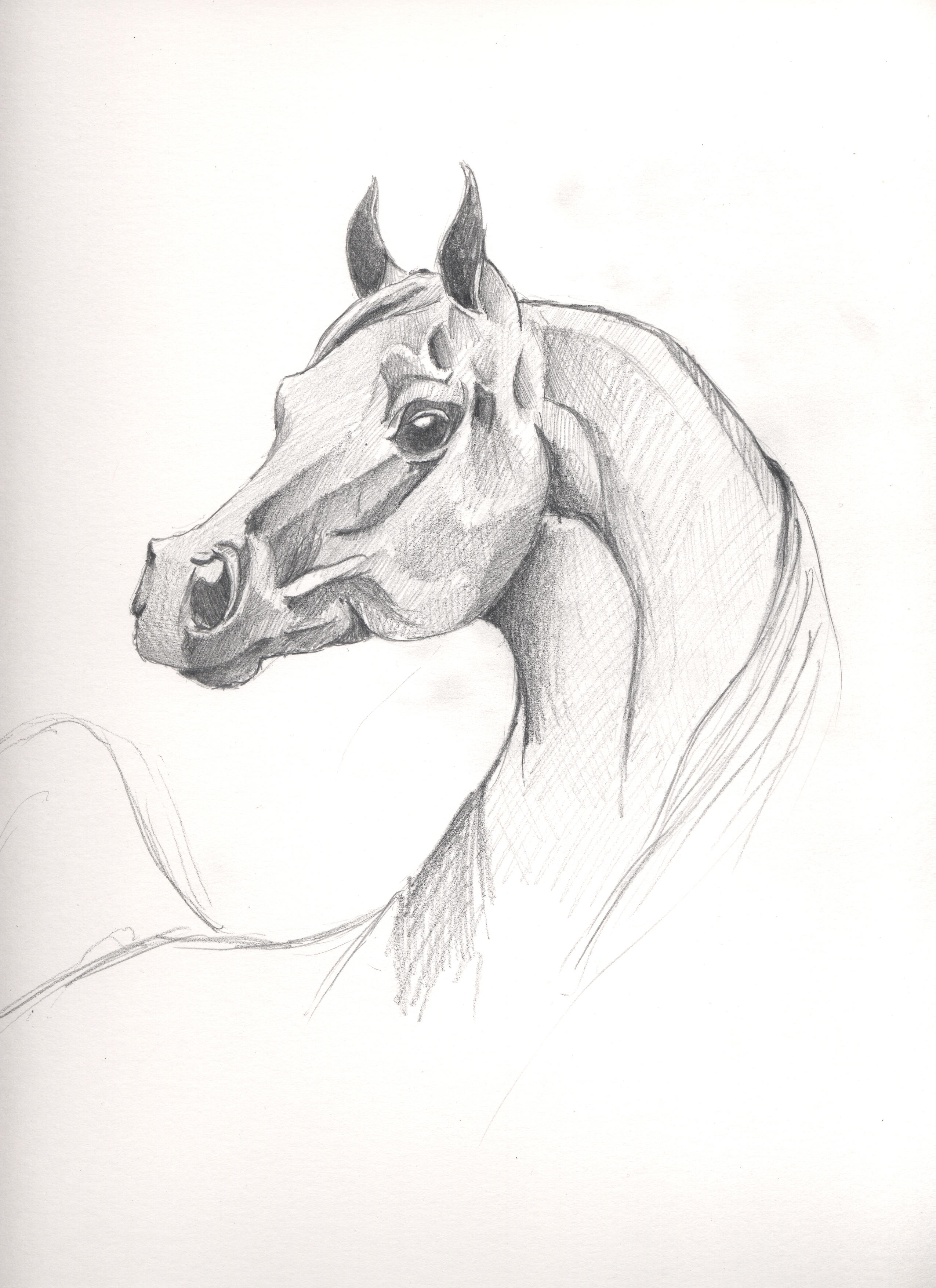 arabian horse by CoZzMiC on DeviantArt