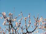Spring Blooms ~2~