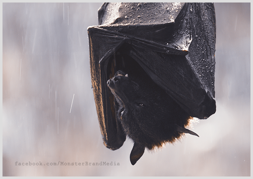 Shelter from the rain v.2 by MonsterBrand