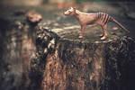 Day 218 - The Last Thylacine