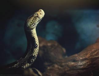 Rattlesnake by MonsterBrand