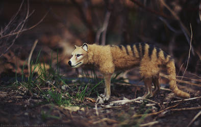 Day 276 - Thylacine by MonsterBrand