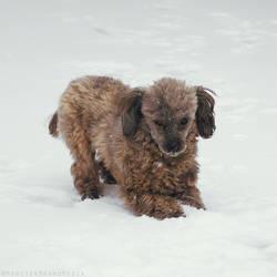 The dreaded snow beast