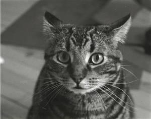 Gremlin the fabulous cat